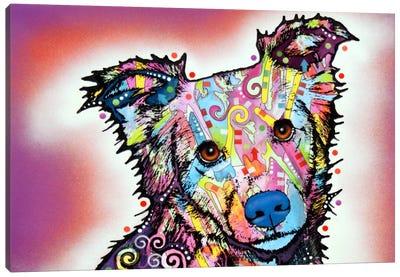 Collied Canvas Art Print