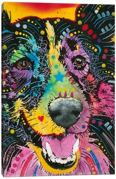Smiling Collie Canvas Print #DRO127