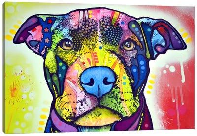 Love A Bull This Years Love Canvas Print #DRO12