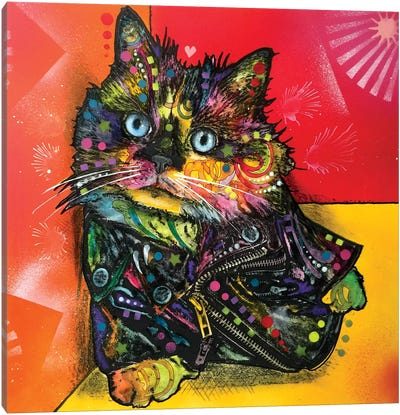 Albert The Baby Cat Canvas Print #DRO223