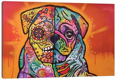 Sugar Pug Canvas Print #DRO236
