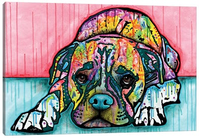 Lying Boxer Canvas Print #DRO238