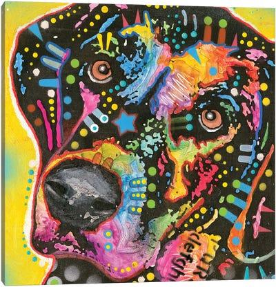 Rhodesian Ridgeback I Canvas Art Print