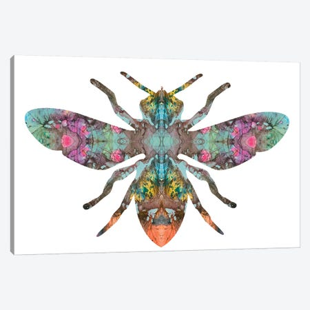 Transverse Bee Canvas Print #DRO700} by Dean Russo Canvas Artwork