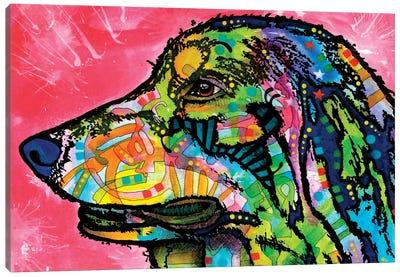 Quinn Canvas Art Print