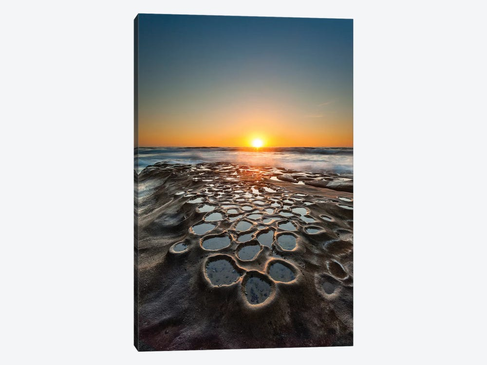 Tide Pools, La Jolla, San Diego, California, USA by Andrew Shoemaker 1-piece Canvas Print