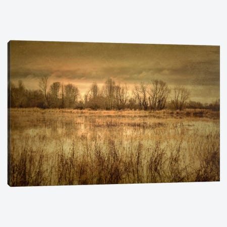 Winter Wetland I Canvas Print #DSC104} by Don Schwartz Art Print