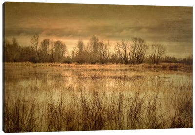 Winter Wetland I Canvas Print #DSC104
