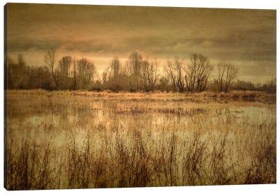 Winter Wetland I Canvas Art Print