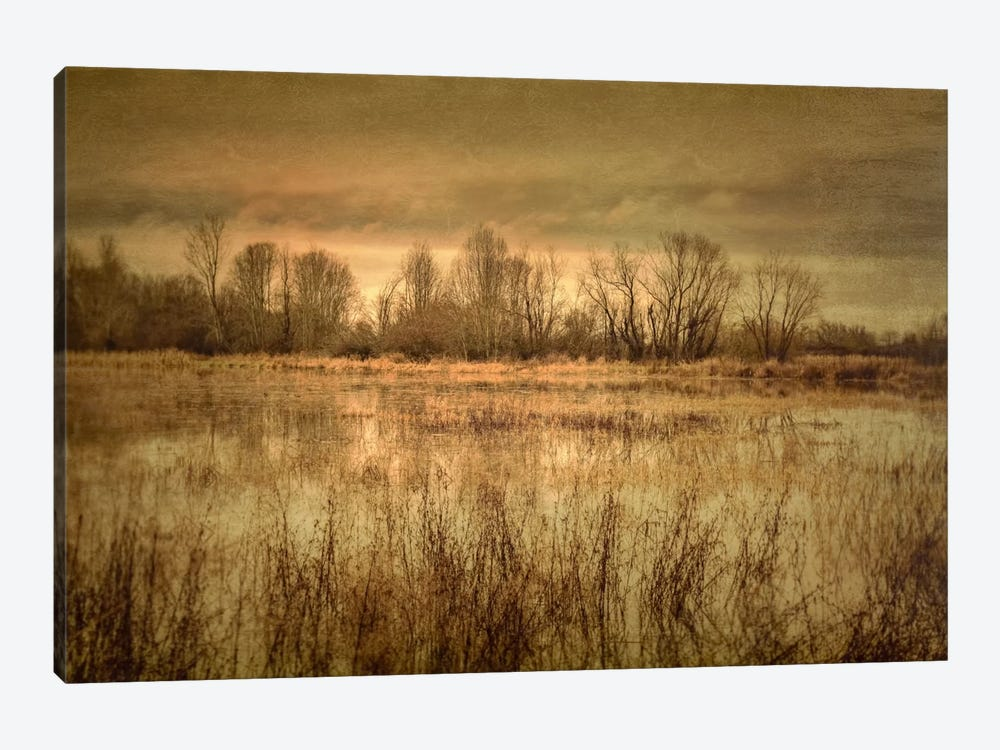 Winter Wetland I by Don Schwartz 1-piece Canvas Wall Art