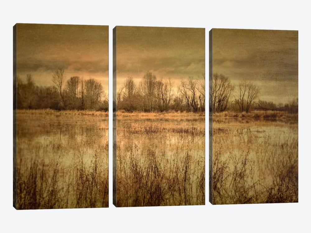 Winter Wetland I by Don Schwartz 3-piece Canvas Art