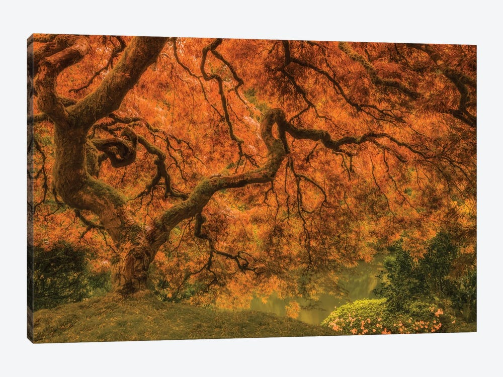 Radiant Maple I by Don Schwartz 1-piece Canvas Wall Art