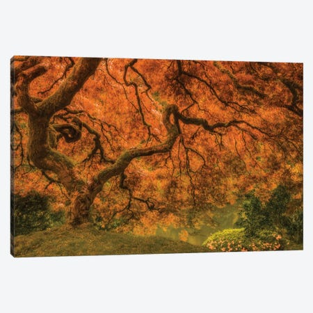 Radiant Maple I Canvas Print #DSC106} by Don Schwartz Art Print