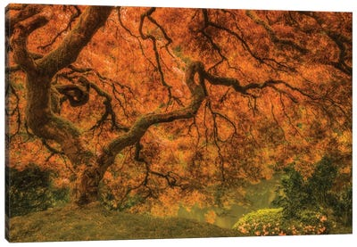 Radiant Maple I Canvas Art Print