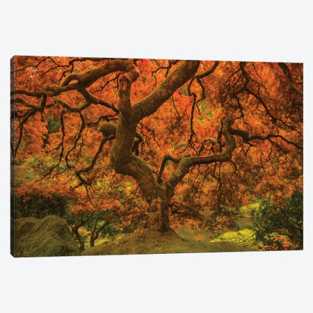Radiant Maple II Canvas Print #DSC107} by Don Schwartz Canvas Print