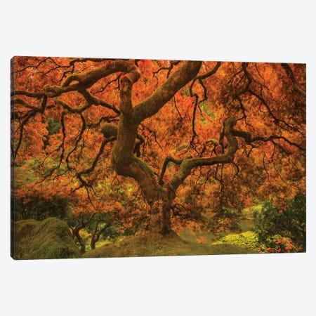 Radiant Maple II Canvas Print #DSC107} by Don Schwartz Canvas Print