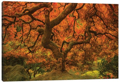 Radiant Maple II Canvas Art Print