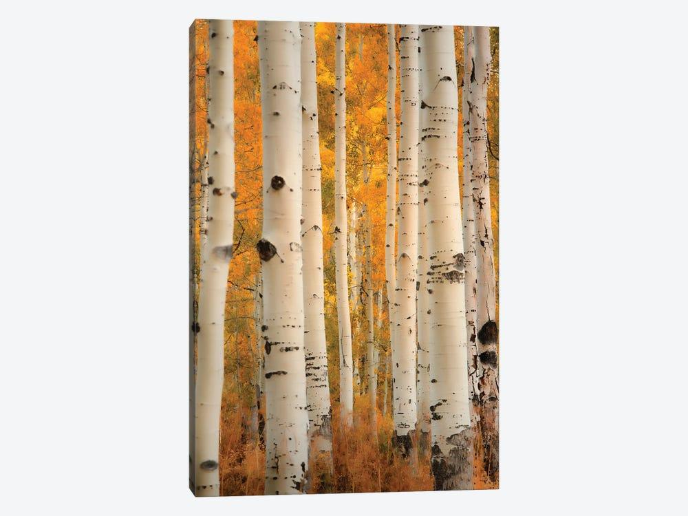 Aspens In Autumn by Don Schwartz 1-piece Canvas Art Print
