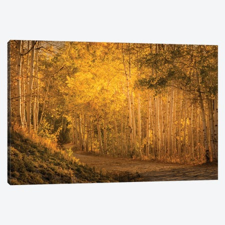 Aspens In The Fading Sunlight Canvas Print #DSC110} by Don Schwartz Canvas Print