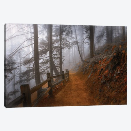 Autumn Fog In The Forest Canvas Print #DSC111} by Don Schwartz Canvas Art Print