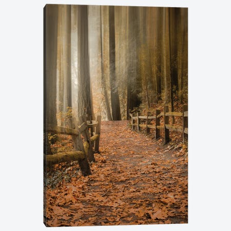 Leafy Path Through The Forest Canvas Print #DSC116} by Don Schwartz Canvas Wall Art