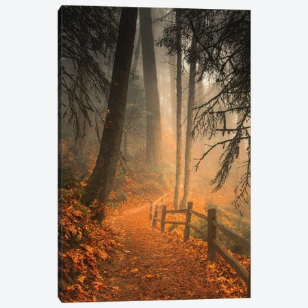 Leaves Through The Trees Canvas Print #DSC117} by Don Schwartz Canvas Artwork