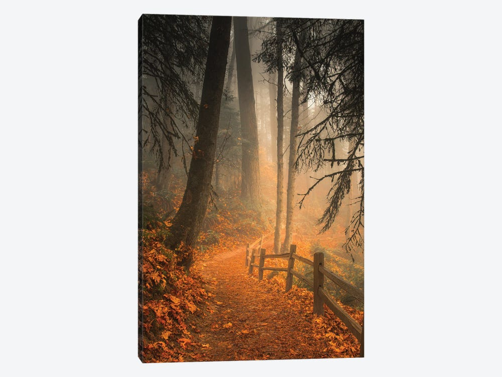 Leaves Through The Trees by Don Schwartz 1-piece Canvas Wall Art