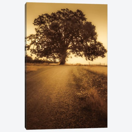 The Tree At The End Of The Road Canvas Print #DSC122} by Don Schwartz Canvas Art