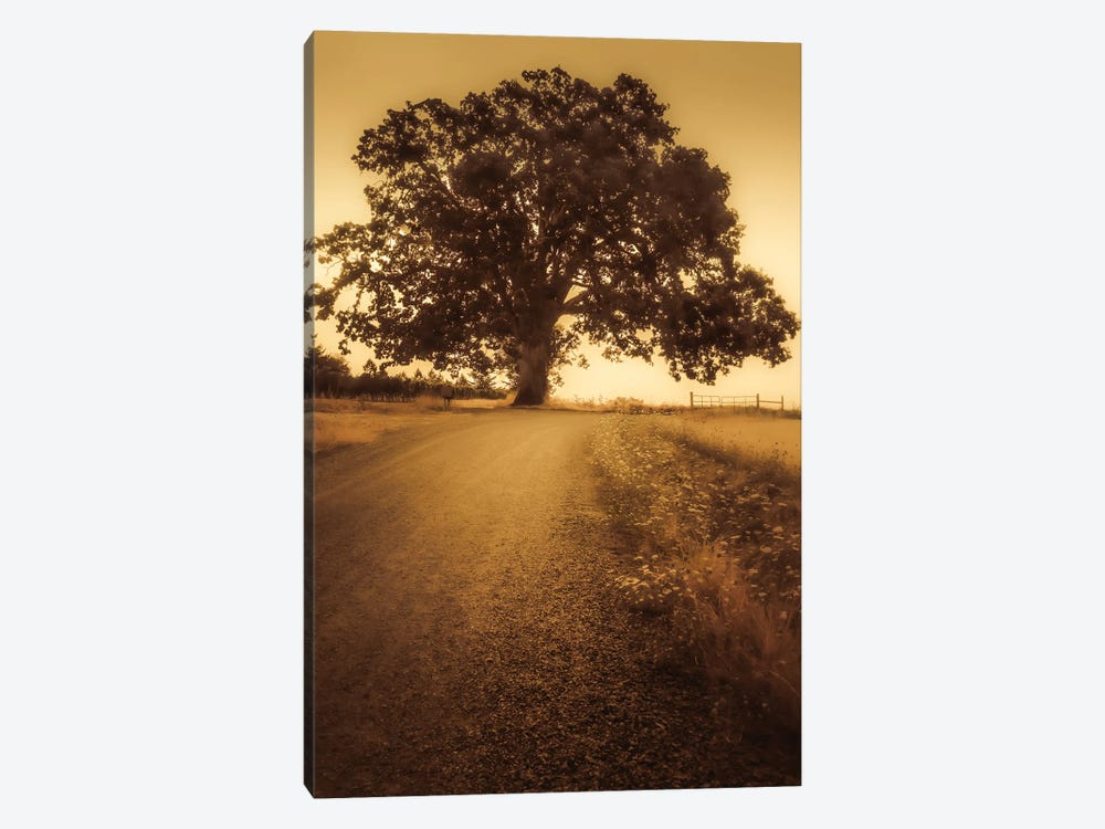 The Tree At The End Of The Road by Don Schwartz 1-piece Canvas Artwork