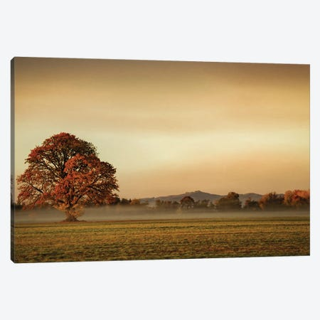 Touched By Fog Canvas Print #DSC123} by Don Schwartz Canvas Artwork