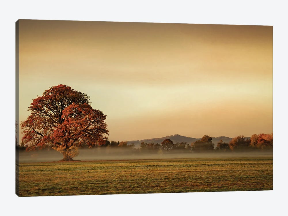 Touched By Fog by Don Schwartz 1-piece Canvas Print