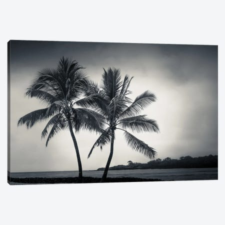 Two Palms Canvas Print #DSC126} by Don Schwartz Canvas Print