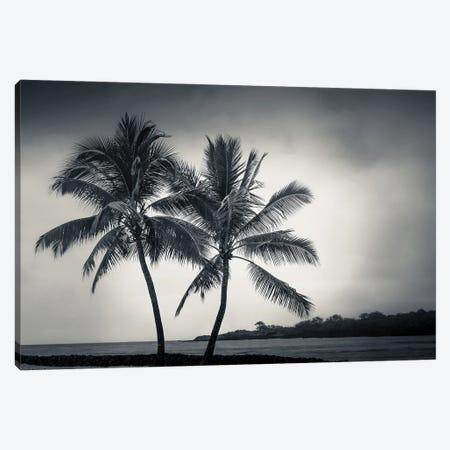 Two Palms Canvas Print #DSC126} by Don Schwartz Canvas Print