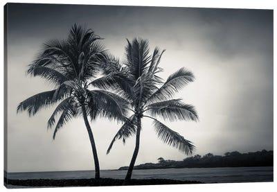 Two Palms Canvas Art Print