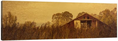 Barn Smothered By Tall Grasses Canvas Print #DSC12