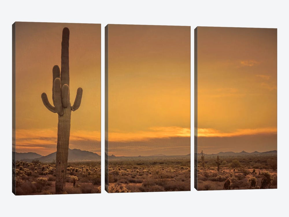 Cactus Sunrise by Don Schwartz 3-piece Art Print