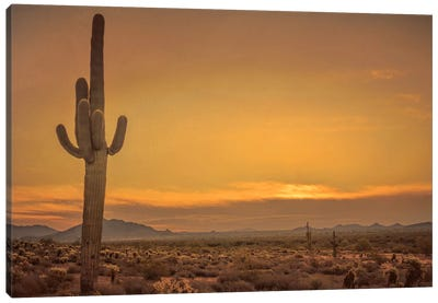 Cactus Sunrise Canvas Art Print