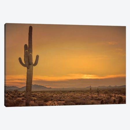Cactus Sunrise Canvas Print #DSC17} by Don Schwartz Canvas Print