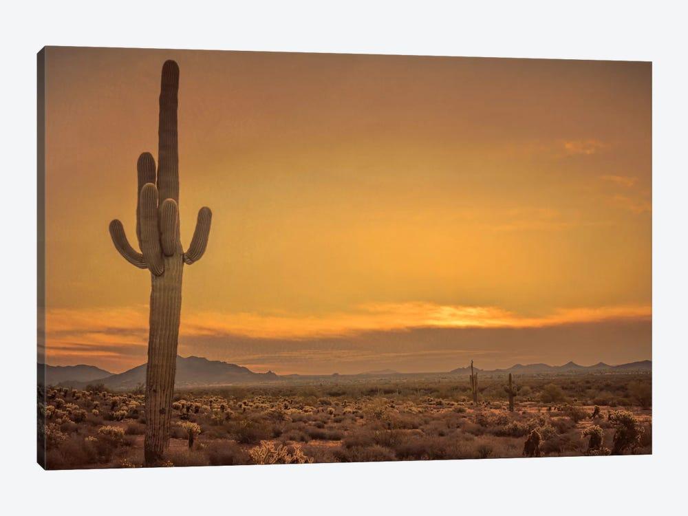 Cactus Sunrise by Don Schwartz 1-piece Canvas Art Print