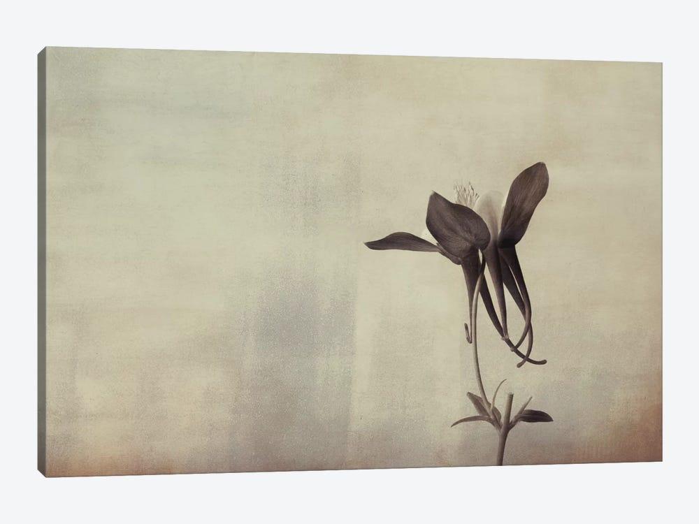 Columbine Simplicity by Don Schwartz 1-piece Canvas Art Print