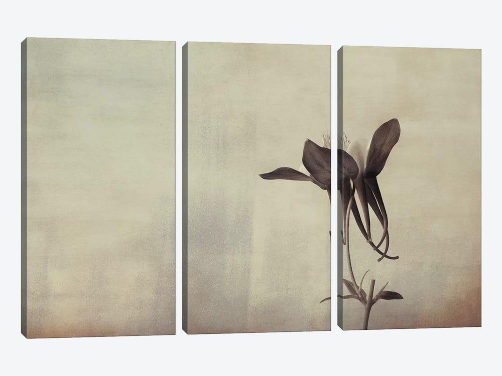 Columbine Simplicity by Don Schwartz 3-piece Canvas Art Print