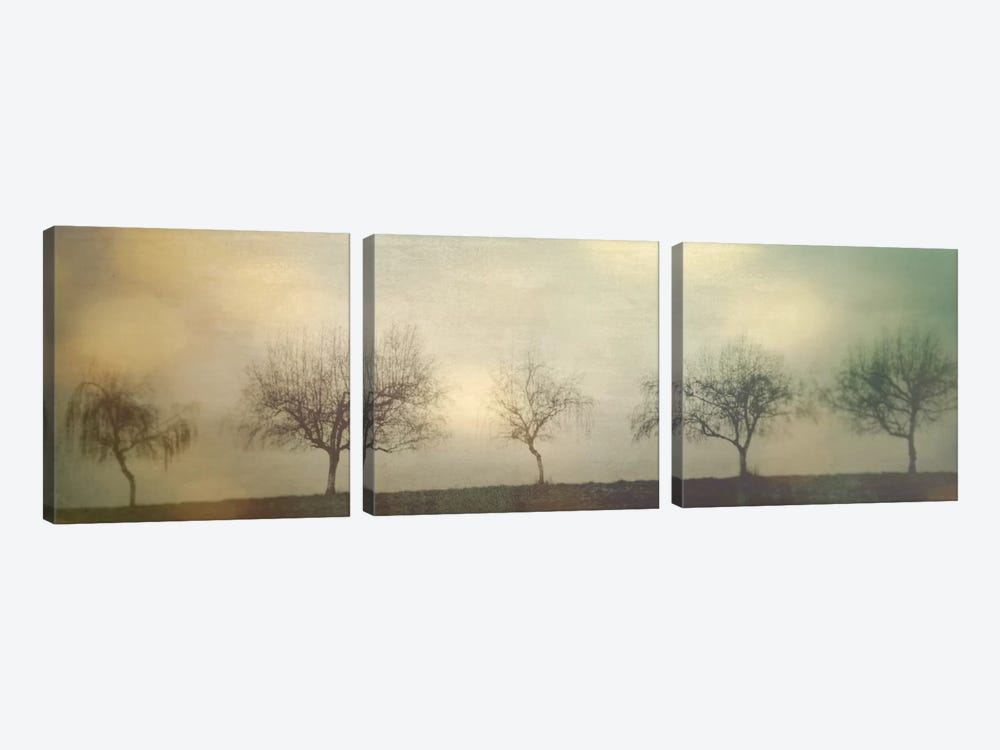 Five Trees On A Hill by Don Schwartz 3-piece Canvas Art Print