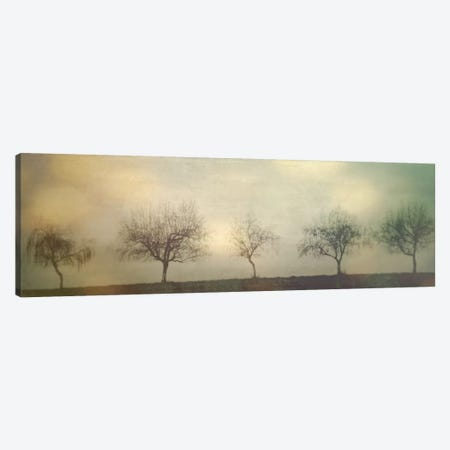 Five Trees On A Hill Canvas Print #DSC31} by Don Schwartz Canvas Artwork