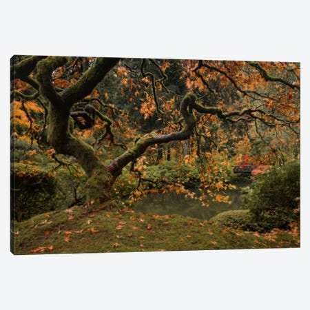 Golden Fall At The Garden Canvas Print #DSC40} by Don Schwartz Art Print