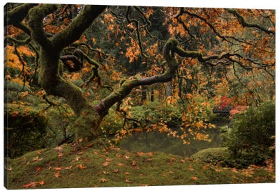 Golden Fall At The Garden Canvas Art Print