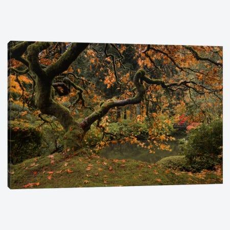 Golden Fall At The Garden Canvas Print #DSC40} by Don Schwartz Art Print