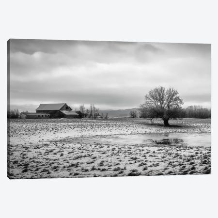 In The Snowy Pasture Canvas Print #DSC45} by Don Schwartz Canvas Art