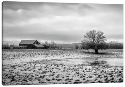 In The Snowy Pasture Canvas Print #DSC45