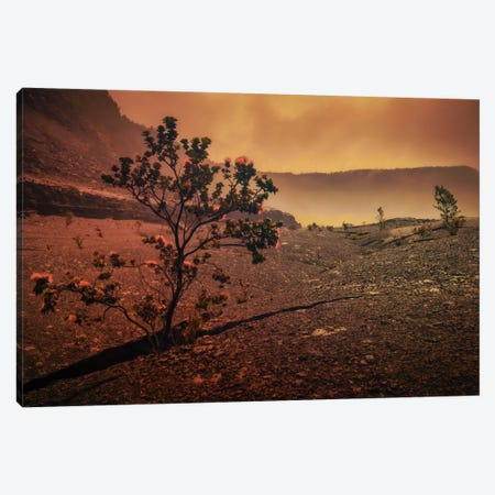 Lava Tree Canvas Print #DSC49} by Don Schwartz Canvas Print