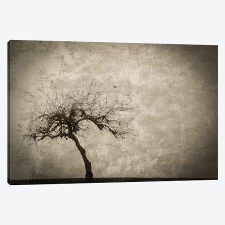 Alone In Winter Canvas Print #DSC4} by Don Schwartz Art Print